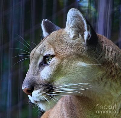 Cheetah Mixed Media - Puma by Robert Pearson