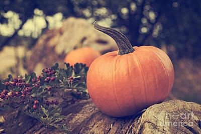 Harvest Time Photograph - Pumpkin by Amanda Elwell