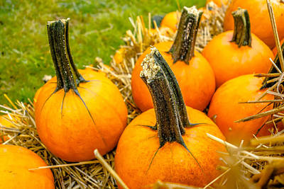 Pumpkin And Harvest Decorations For The Holidays Print by Alex Grichenko