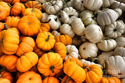 Farm Stand Photograph - Pumpkin And Pumpkin by Olivier Le Queinec