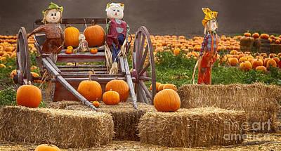 Thanksgiving Photograph - Pumpkin Patch by David Millenheft