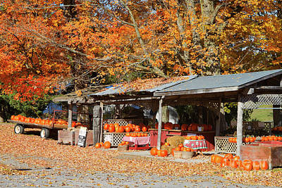 Pumpkins For Sale Print by Louise Heusinkveld