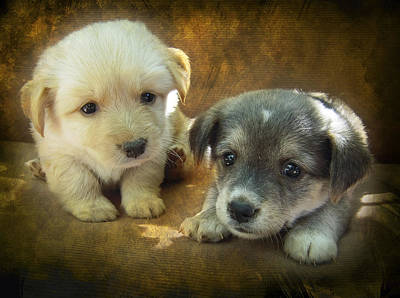 Puppy Digital Art - Puppies by Svetlana Sewell