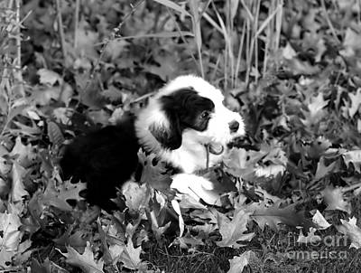 Puppy In The Leaves Print by Kathleen Struckle