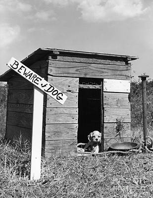 Puppy With Beware Of Dog Sign, C.1950s Print by D. Corson/ClassicStock