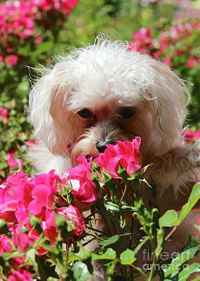 Cute Puppy Photograph - Puppy With Roses by Carol Groenen