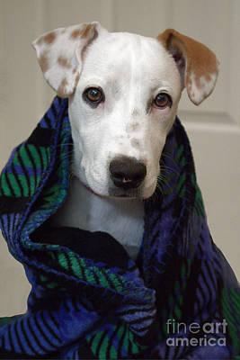 Purebred Digital Art - Puppy Wrapped In Blanket by Ella Kaye Dickey