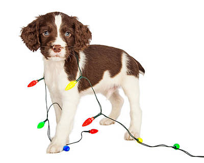 Puppy Wrapped In Christmas Lights Print by Susan  Schmitz