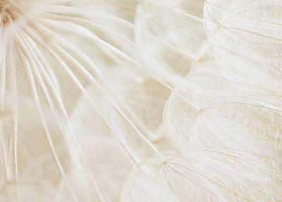 Dandelion Photograph - Pure Bliss by  The Art Of Marilyn Ridoutt-Greene