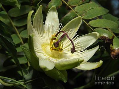 Passionfruit Photograph - Pure Passion by Lingfai Leung