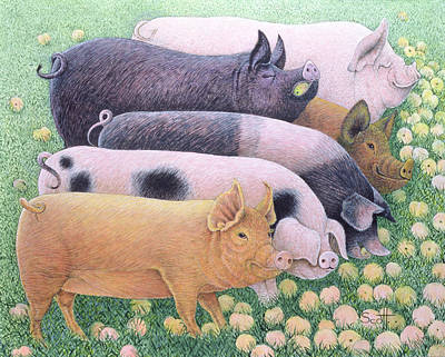 Pig Drawing - Pure Pleasure by Pat Scott