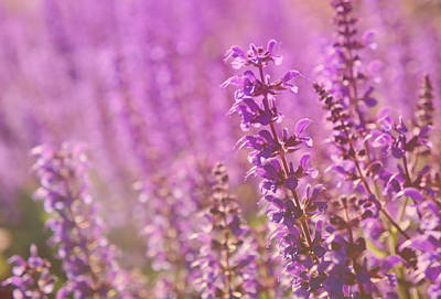 Purple Beauty Print by Art Spectrum
