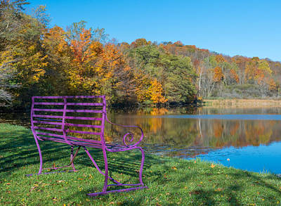 Purple Bench By A Pond Print by Guy Whiteley