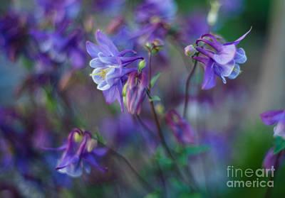 Purple Columbine Montage Print by Mike Reid