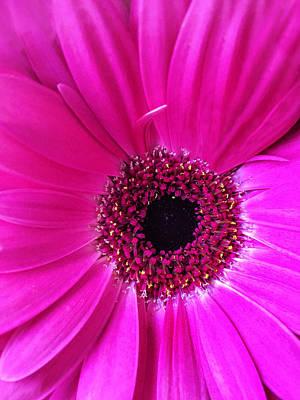 Color Photograph - Purple Flower by Andrew Soundarajan