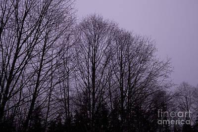 Tree Photograph - Purple Haze by Carolyn Brown