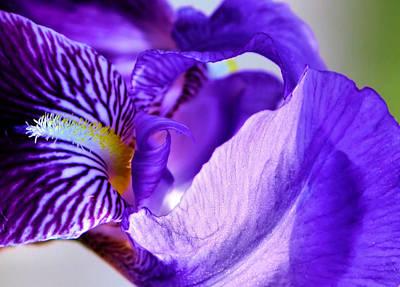 Outdoor Still Life Photograph - Purple Heart by Karen M Scovill
