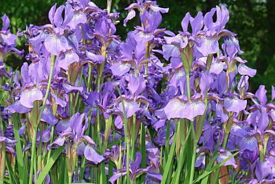 Purple Iris Bunch Original by Geralyn Palmer
