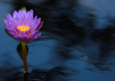 Florida Flowers Digital Art - Purple Lotus by Sharon Batdorf