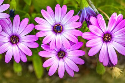 Vision Photograph - Purple Pals by Az Jackson