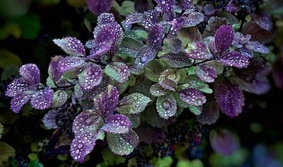Purple Rain Print by Kathleen Alhaug