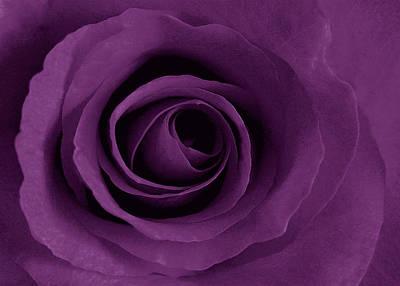 Purple Rose Of Artsy Print by Leonard Rosenfield
