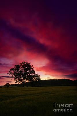 Purple Skies Print by Angel  Tarantella