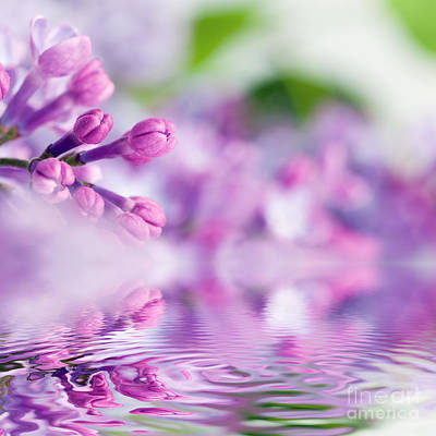 Detail Photograph - Purple Spring Lilac Flowers In Water Reflection by Michal Bednarek