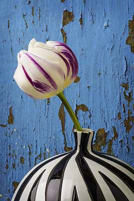 White Tulip Photograph - Purple White Tulip Against Blue Wall by Garry Gay