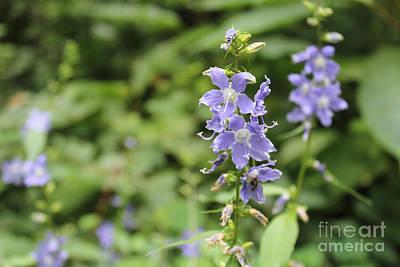 Missouri Purple Wildflower, Tall Bellflower Print by Adam Long