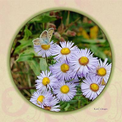 Montana Digital Art - Purplish Copper On Wild Asters by Kae Cheatham