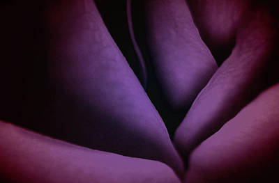 Unique Photograph - Purplish Love by The Art Of Marilyn Ridoutt-Greene