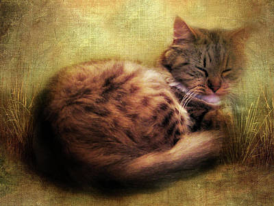 Paws Digital Art - Purrfectly Content by Jessica Jenney
