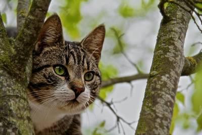 Hiding Photograph - Puss N Tree by Odd Jeppesen