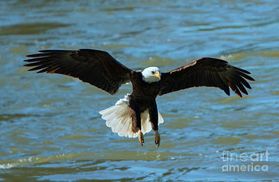 Talons Photograph - Putting On The Brakes by Mike Dawson