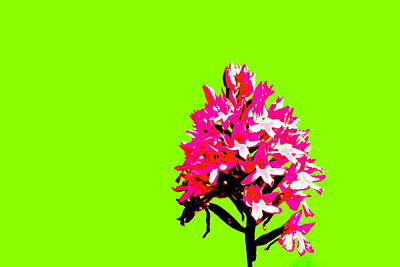 Manipulation Photograph - Green Pyramid Orchid by Richard Patmore