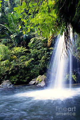 Quebrada Juan Diego Waterfall Print by Thomas R Fletcher