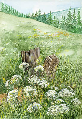 Queen Anne Painting - Queen Anne's Lace In A Mountain Meadow by Virginia McLaren