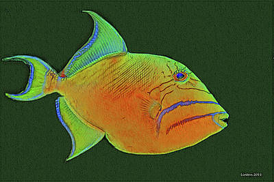 Triggerfish Digital Art - Queen Triggerfish 2 by Larry Linton
