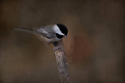 Chickadee Photograph - Quicksilver 2 by Jai Johnson