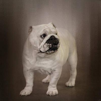 Bulldog Photograph - Quiet Observer by Jai Johnson