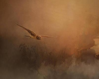 Jordan Painting - Quiet Time - Bird Of Prey Art by Jordan Blackstone