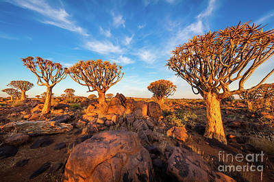 Quiver Trees 7 Print by Inge Johnsson