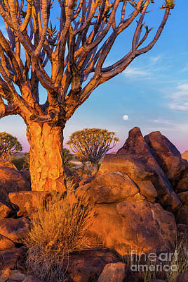 Quiver Trees 8 Print by Inge Johnsson
