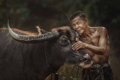 Thailand Photograph - R U Ready For Work? by Jakkree Thampitakkull