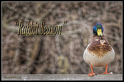 Rabbit Photograph - Rabbit Season by LeeAnn McLaneGoetz McLaneGoetzStudioLLCcom