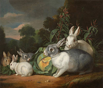 Inspirational Painting - Rabbits Family To A Cabbage by Celestial Images
