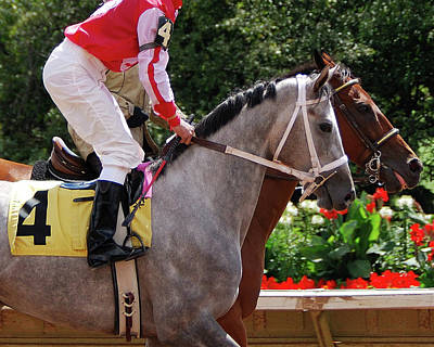 Joseph Duba Photograph - Race Horse No 4  2008 by Joseph Duba