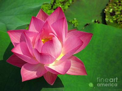 Radiant Water Lily Print by Yali Shi