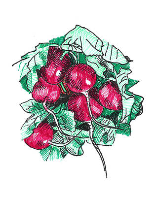 Radishes Original by Masha Batkova